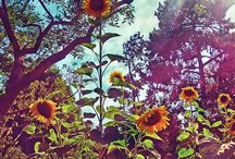 Garden Desires / by Melissa Carranza