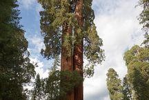 Go California / by Michelle Hernandez