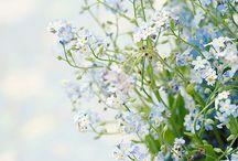 I like flowers / by Taija Syrman