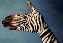 my not so secret obsession with zebras / by Keshia Larsen