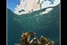 AQUAlangas 2013 / Ar žinote, kaip atrodo gyvenimas po vandeniu? GENERAL FINANCING įkvėptas unikalus projektas AQUA langas padeda atsakyti į šį klausimą. Daugiau: www.aqualangas.lt