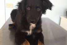 Cani in cerca di casa / In questa bacheca trovate una lista di cani in cerca di famiglia!