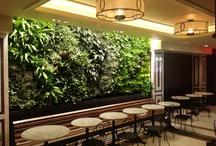 Blondie's Green Walls