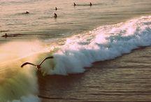 Surf / by Gem Yates