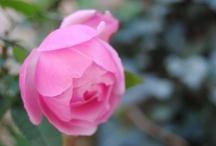 APFMHead Flowers / Lo que más me gusta fotografiar son las flores, aquí solo verás flores bonitas.