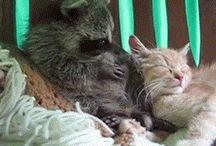 Funny animals GIF