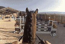 video chevaux