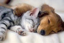 Animali / Cuccioli di cani e gatti