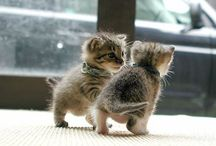 CATS / adorable little cats