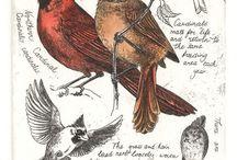 rysunki ptaków