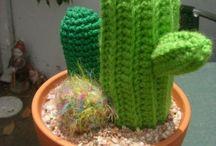 Habe will Kaktus