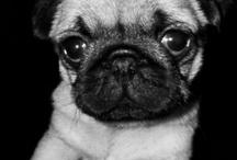 Pup love / by Emm Toyne