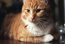 Redcat / Cat