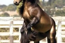 Horses / by Doanie Ashby