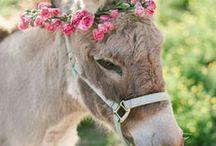 caballos y familiares