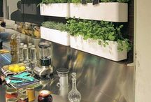 Herbs in kitchen