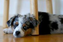 Pets / by JaredAlyssa Hutson