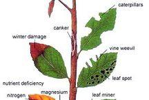 Jardineria / Plagas y enfermedades