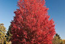 Fall plantings / by K R