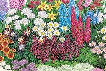 Garden Plans / Ready-made garden plans and plant lists to help you design your own yard and garden.