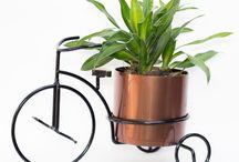 Plantas para decorar / Ideas de plantas de interior para decorar el hogar
