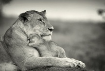 Africa <3 / My heart belongs to this place...