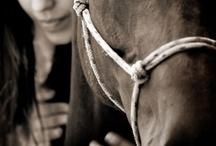 foto hest