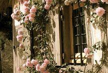 ventanas rusticas