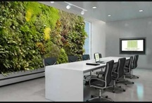 Workplace Vertical Gardens