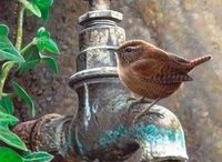 Birds & ..