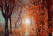 Forest / Seasons / by Kippy Dishman