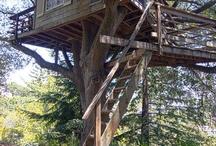 Tree houses / Home design