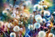 kauniit kuvia