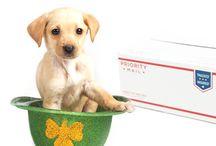 Postal Pets / by U.S. Postal Service