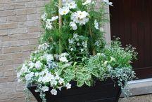 kwiaty,ogris
