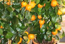 Obst und Gemüse / Obst- und Gemüsepflanzen, mediterrane Pflanzen