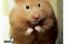 Funny Mice