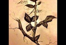 róża1