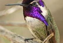 colibries logo