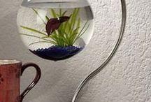 Fishy fish taknk