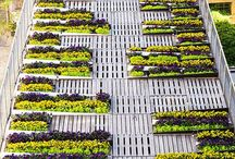Green Roofs_Plans
