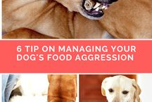 food agression dogs
