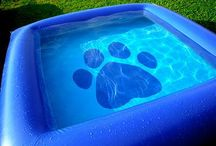 Pools for pups