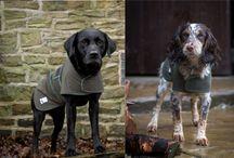 Dog & Field / Dog and Field Ltd - Gundog Training Equipment
