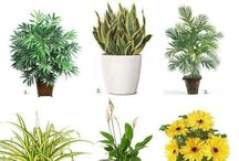 Plants for healthy living / These plants and herbs help to bring beauty, flavor and health to your home and garden.  Learn to recognize and choose the plants that are right for you. / by Jolene Little