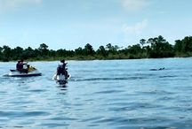 Crab island Watersports Dolphin Tours