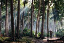Foresta pluviale di Havelock