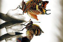 Motýli, vážky ,pavouci, hmyz