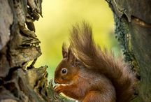 Red Squirrel / by Gloria Cain