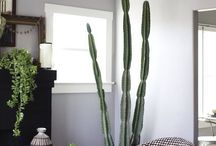 Plants for Decoration